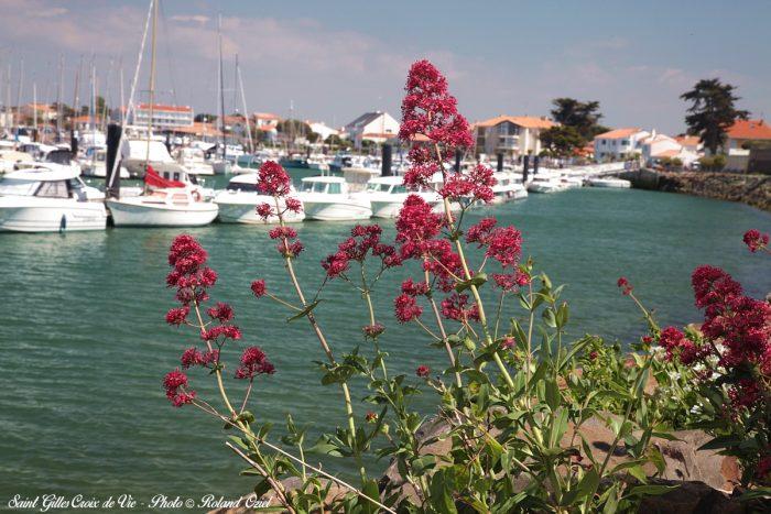 Port de plaisance saint gilles croix de vie hotel